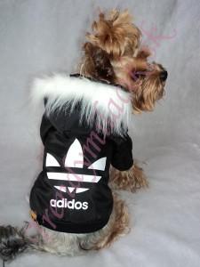 41d4c5abc9e6 Zimná štýlová bundička ADIDOS - oblečenie a móda pre psov ...